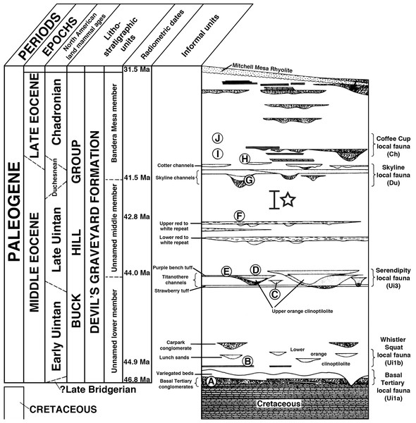Stratigraphic column of the Devil's Graveyard Formation, modified from Stevens, Stevens & Wilson (1984) and Wilson (1986).