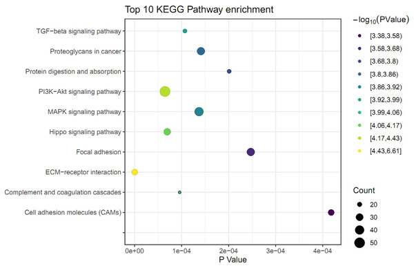 KEGG pathway analysis of differently expressed genes (DEGs) in skin fibroblasts treated with FGF2.