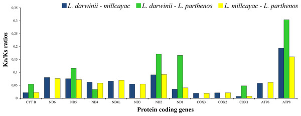 The ratios of non-synonymous (Ka) versus synonymous (Ks) substitutions (Ka/Ks ratios) of the 13 PCGs in the mitogenomes of Liolaemus especies.