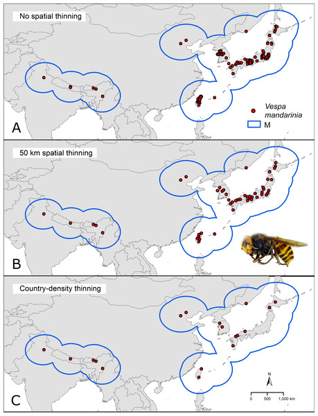 Hypothesis of accessible areas (M) and representation of the occurrence records of Vespa mandarinia across its native distribution.