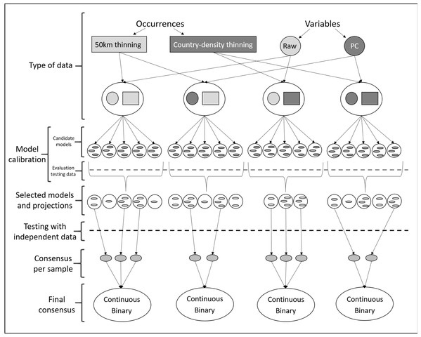 Schematic representation of methods used to obtain ecological niche models for Vespa mandarinia.