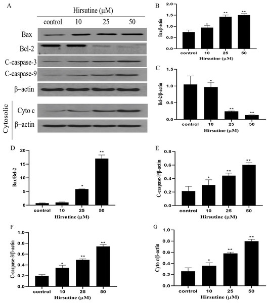 Effects of hirsutine on Bcl-2 family proteins, and caspase activation proteins in Jurkat Clone E6-1 cells.