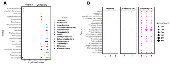 Differential abundance of ASVs in Pseudosiploria strigosa colonies with or without signs of White Syndrome.
