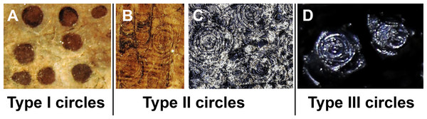 The three types of circles occurring in the fossils described here.