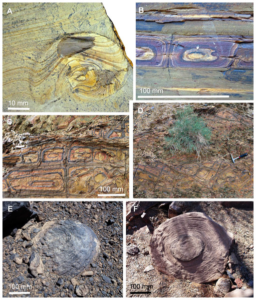 Liesegang rings in sediments and fossils.