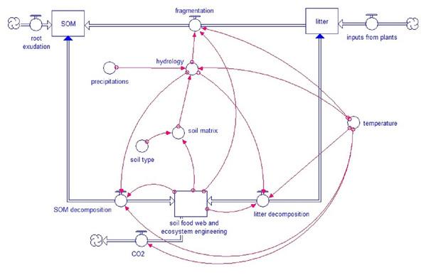 Simplified model scheme.