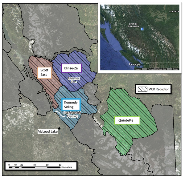 Caribou herds in central British Columbia, Canada showing the different population management treatments applied to each.