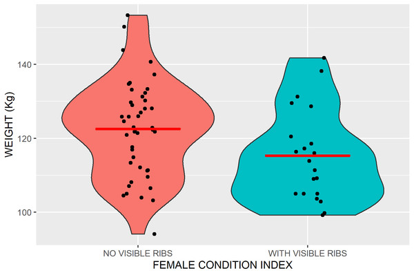 Violin plots outlining the kernel probability density of Kennedy Siding female caribou weights with and without visible ribs.