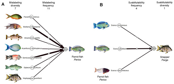 Networks showing results from this study for parrotfish (perico) to exemplify the terminology of mislabeling (A) and substitution (B) explained in Table 1 and used throughout the article.