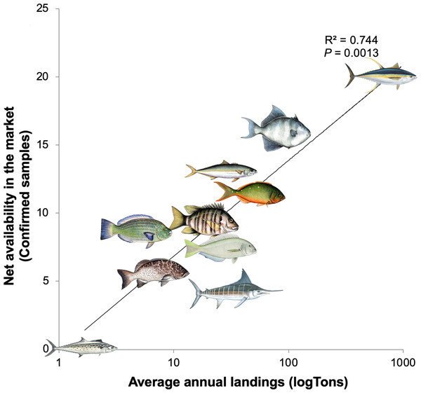 Linear regression analysis showing the relationship of average annual fish landings and net availability of each species in the market for the 10 most frequent commercial names found in La Paz, Mexico.