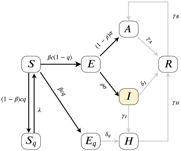 Model diagram for infection dynamics.