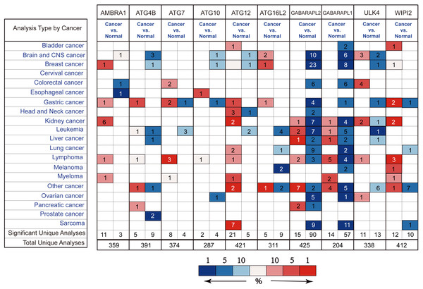 Different ATGs mRNA expression in different tumor types.