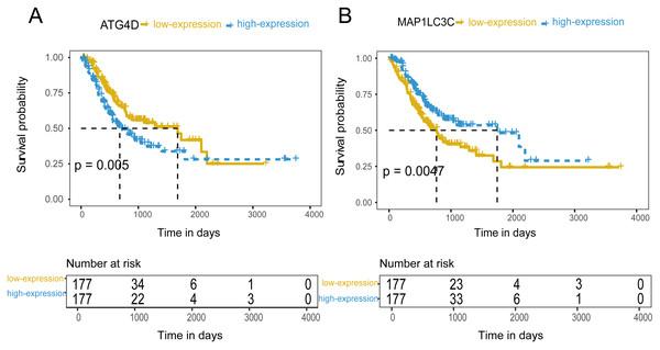 The prognostic value of mRNA level of independent prognostic factors.