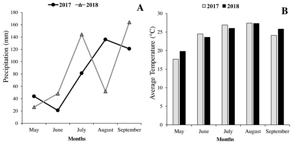 Monthly rainfall (A) and temperature (B) from May to September (2017–2018) at the Rasht, Iran.