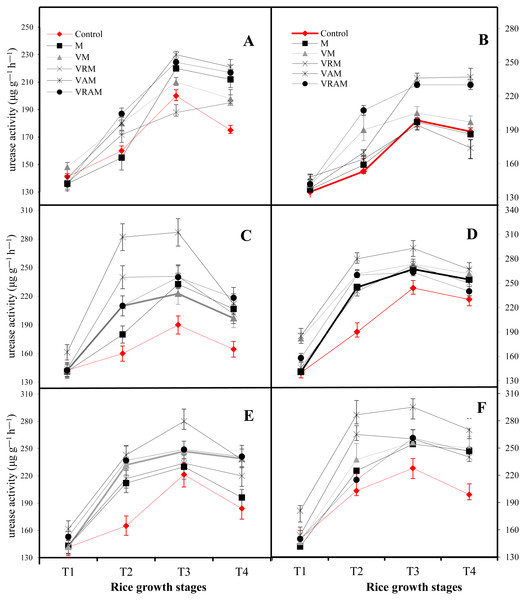 Dynamics of Urease activity in a flooded rice at different growth stages of rice planted under organic amendments and N2-fixing bacteria.