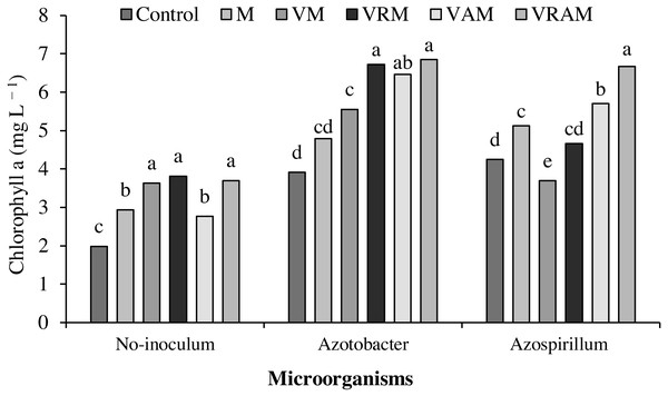 Mean comparison of effect of organic amendment on chlorophyll a under inoculation with N2-fixing bacteria.