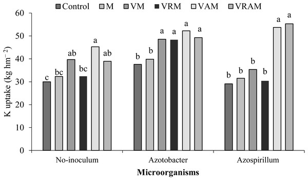 Mean comparison of the effect of organic amendment on K uptake under inoculation with N2-fixing bacteria.