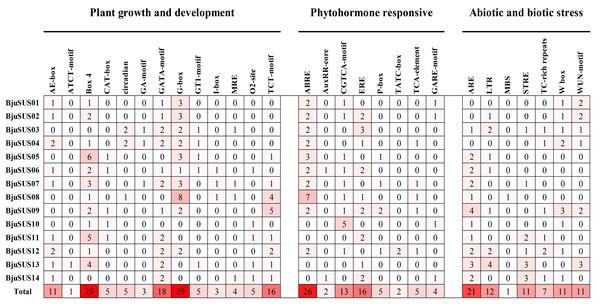 Analysis of cis-regulatory elements in the promoter regions of mustard SUS genes.