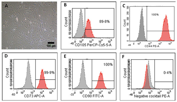 Characterization and differentiation potential of ADSCs.