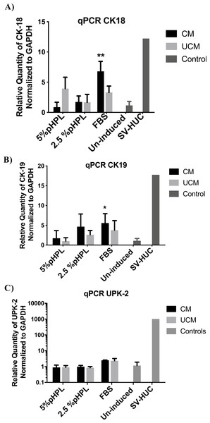 Relative gene expression of urothelial markers.
