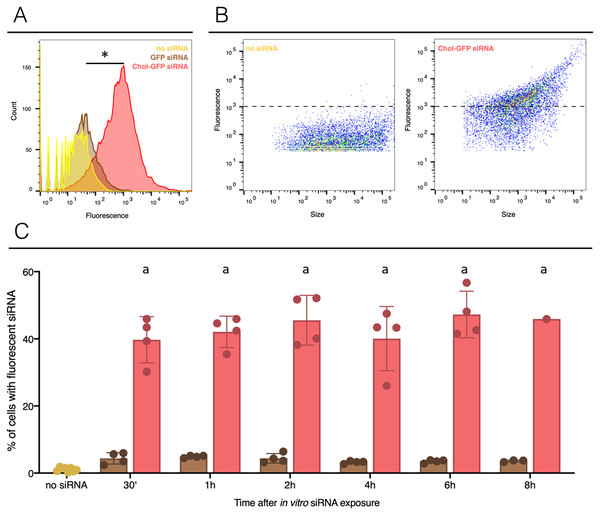 siRNA incorporation with or without lipid-conjugation in hemocytes ex vivo.