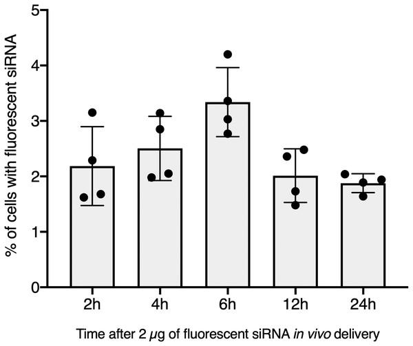 In vivo hemocyte incorporation of Cholesteryl-TEG siRNA.
