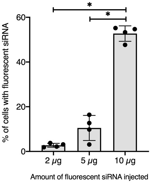 Quantitative optimization of siRNA injected into snails for an efficient delivery on hemocyte in vivo.