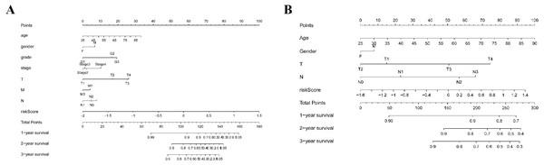 Nomogram plot for the clinical characteristics and prognostic gene signatures.