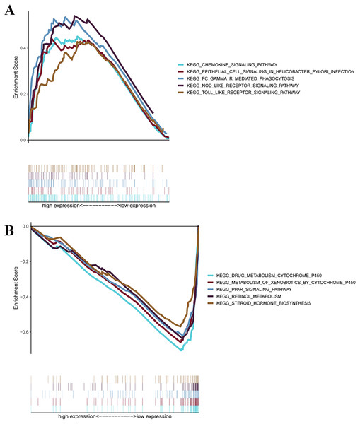 GSEA for samples with high levels of prognostic gene signature and low expression.