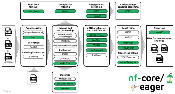 Simplified schematic of the nf-core/eager workflow pipeline.