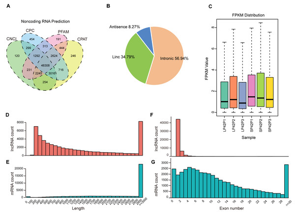 Identification of lncRNAs and mRNAs in ovine PD.