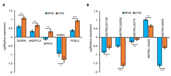 Validation of the expression patterns of lncRNA and mRNA using qRT-PCR.