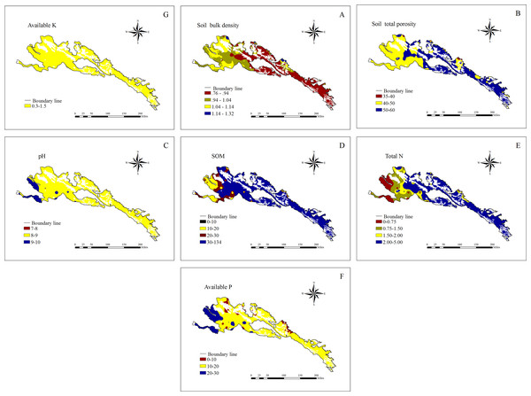 Soil physical and chemical spatial distribution.