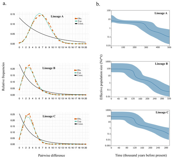 (A) Mismatch distribution and (B) Bayesian skyline plot for Lineage A, B, and C.