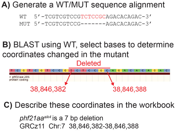 Example of how to determine DNA coordinates for a simple deletion allele, phf21aaaik4.