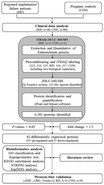 The workflow for endometrial biomarkers of repeated implantation failure (RIF) and pregnant controls (CON).