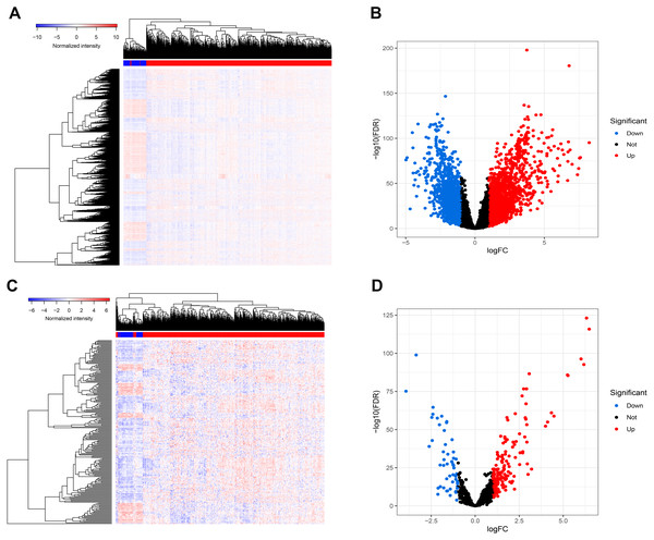 Differentially expressed mRNAs and lncRNA.