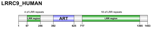 Domain organization of LRRC9 proteins.