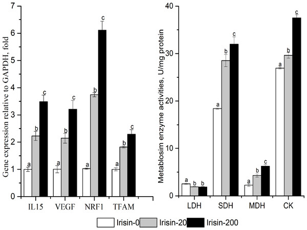 Effects of adding irisin the metabolic enzyme activities(B) and other downstream genes expressions (A) in C2C12 myotubes.