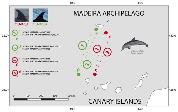 Map showing the two-way movements of two bottlenose dolphins between Madeira Island and La Palma, in the Canary Islands (round-trip of ≈ 920 km).