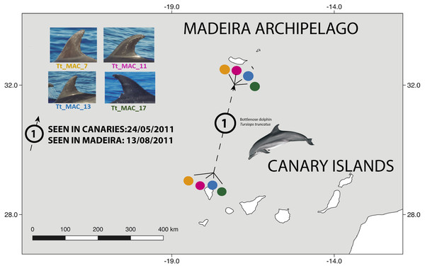 Map showing the movement of four bottlenose dolphins between the island of La Palma, in the Canary Islands and Madeira (≈ 500 km).