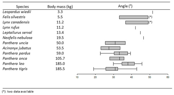 Boxplots and whiskers showing the statistical distribution of measured inter-iliac angle in studied species.