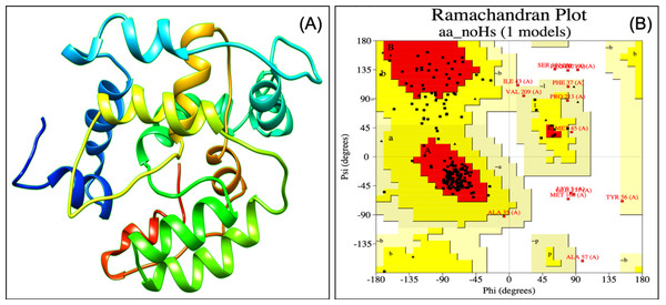 Tertiary structure of modeled VTC3 construct (A) and Ramachandran plot of the modeled proteins (B).