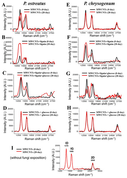 Chemical modifications into the MWCNTs by P. ostreatus and P. chrysogenum growth determined by Raman spectroscopy.