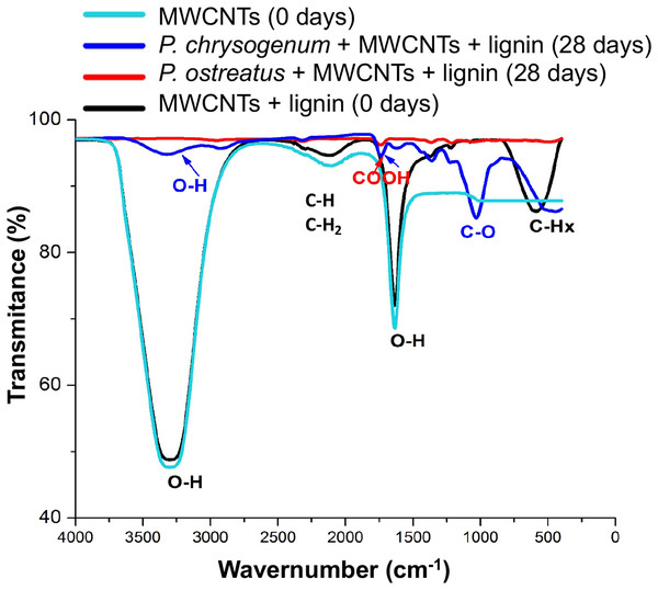 Chemical modifications into the MWCNTs by P. ostreatus and P. chrysogenum growth determined by FTIR spectroscopy.