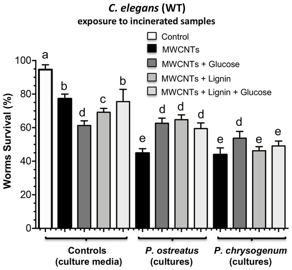 Toxic effects on C. elegans worms exposed to cultures of P. ostreatus and P. chrysogenum grown with MWCNTs.