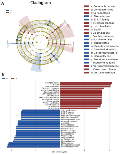 The overall structure and composition of the gut microbiota difference between the pre- and post-liraglutide-treatment group.