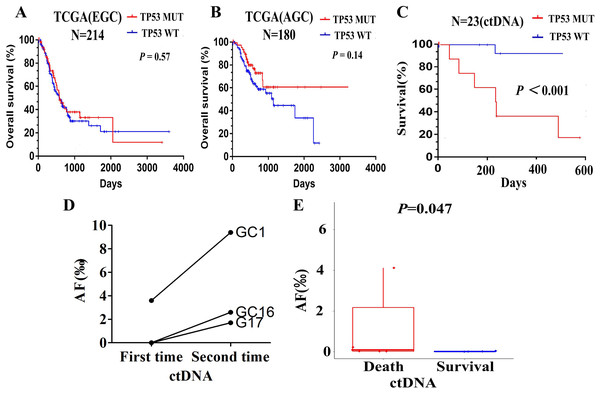 Relationship between TP53 and prognosis of patients with advanced gastric cancer.