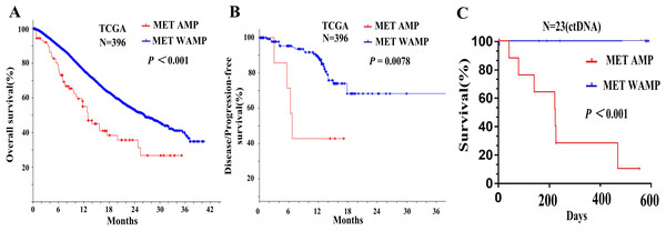 Relationship between MET amplification and prognosis of patients with advanced gastric cancer.