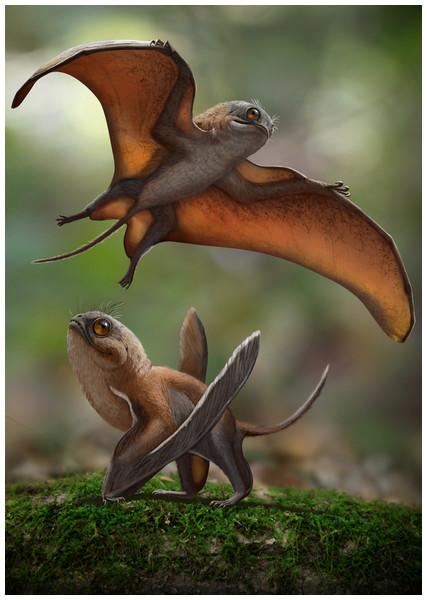 Life reconstruction of Sinomacrops bondei.